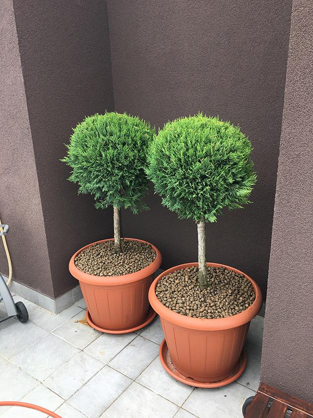 Засаждане на нова растителност в контейнери на клиента и покриване на почвата с керамзит